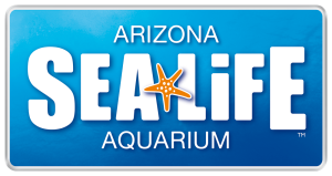 29 Pixel Studios creates video commecial for SEA LIFE Arizona